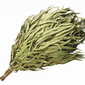 From Russia VENIK - (Eucalyptus)